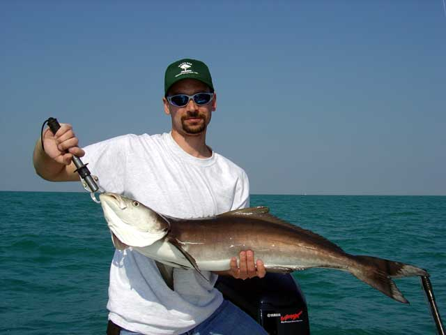 client with cobia