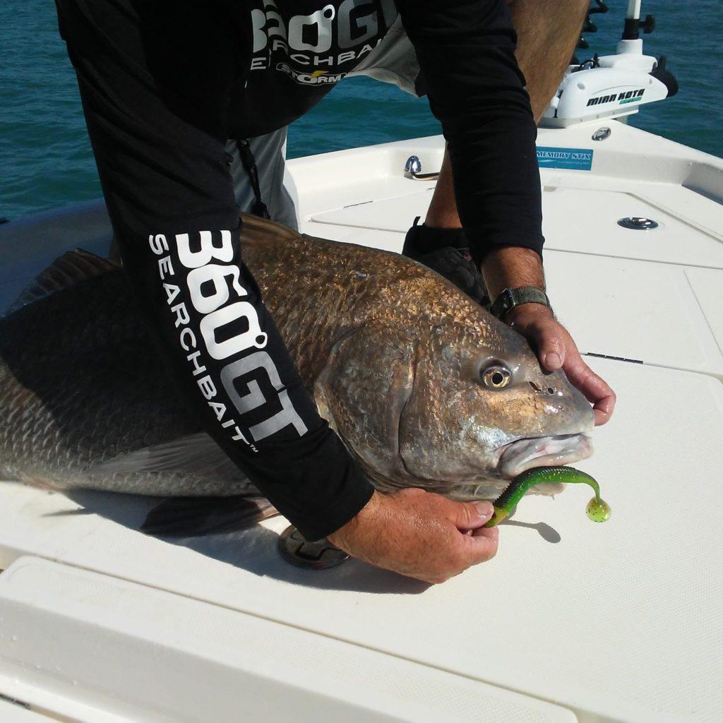 Captain Jim Ross caught this black drum on a Storm 360 GT search bait